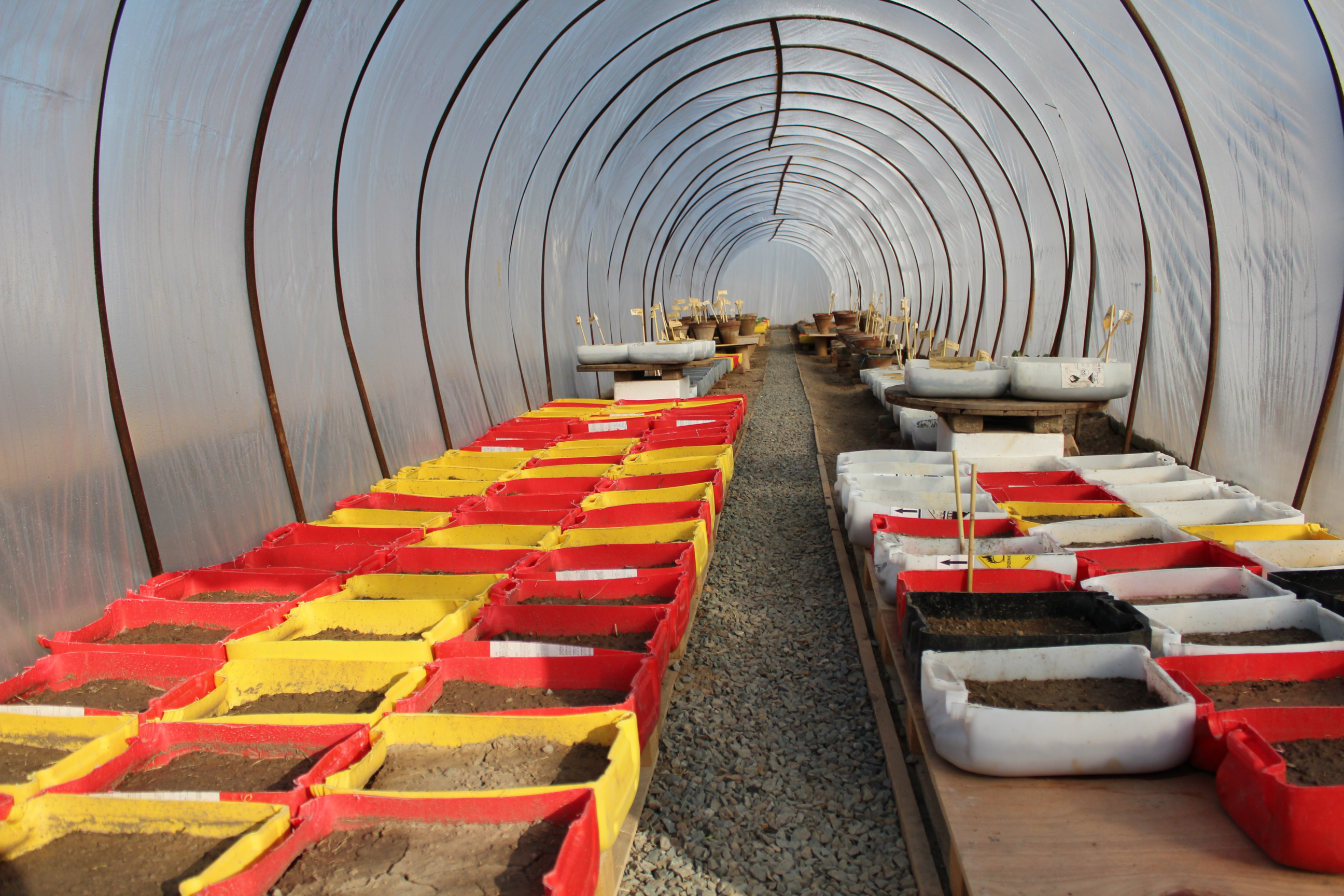 Poly-tunnels-where-seeds-are-started-for-kitchen-garden1